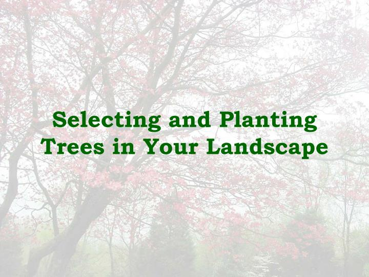 selecting and planting trees in your landscape n.
