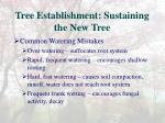 tree establishment sustaining the new tree4