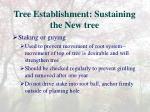 tree establishment sustaining the new tree9