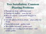 tree installation common planting problems