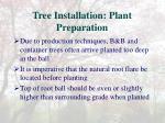 tree installation plant preparation