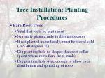 tree installation planting procedures