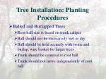 tree installation planting procedures5