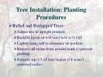 tree installation planting procedures7