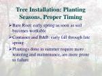 tree installation planting seasons proper timing