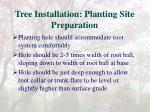 tree installation planting site preparation
