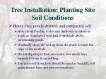 tree installation planting site soil conditions