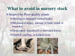 what to avoid in nursery stock