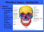 maxillary bones landmarks2