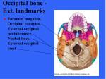 occipital bone ext landmarks