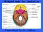 occipital bone int landmarks
