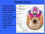 palatine bones