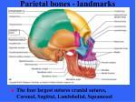 parietal bones landmarks