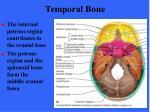 temporal bone1