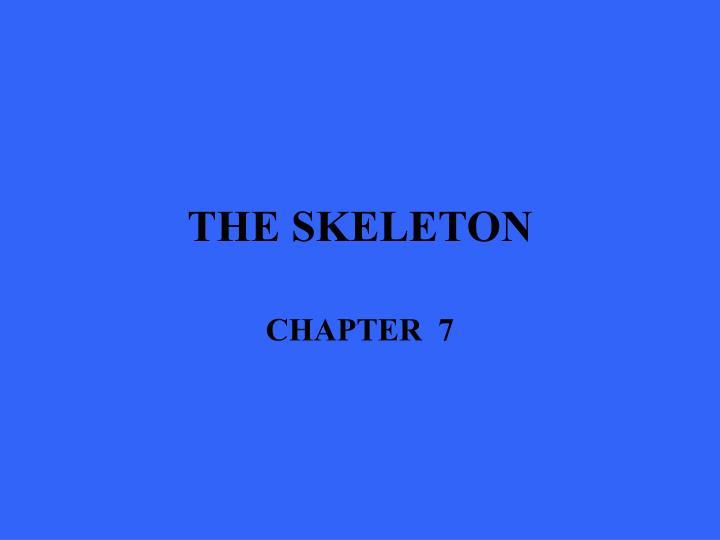 the skeleton n.