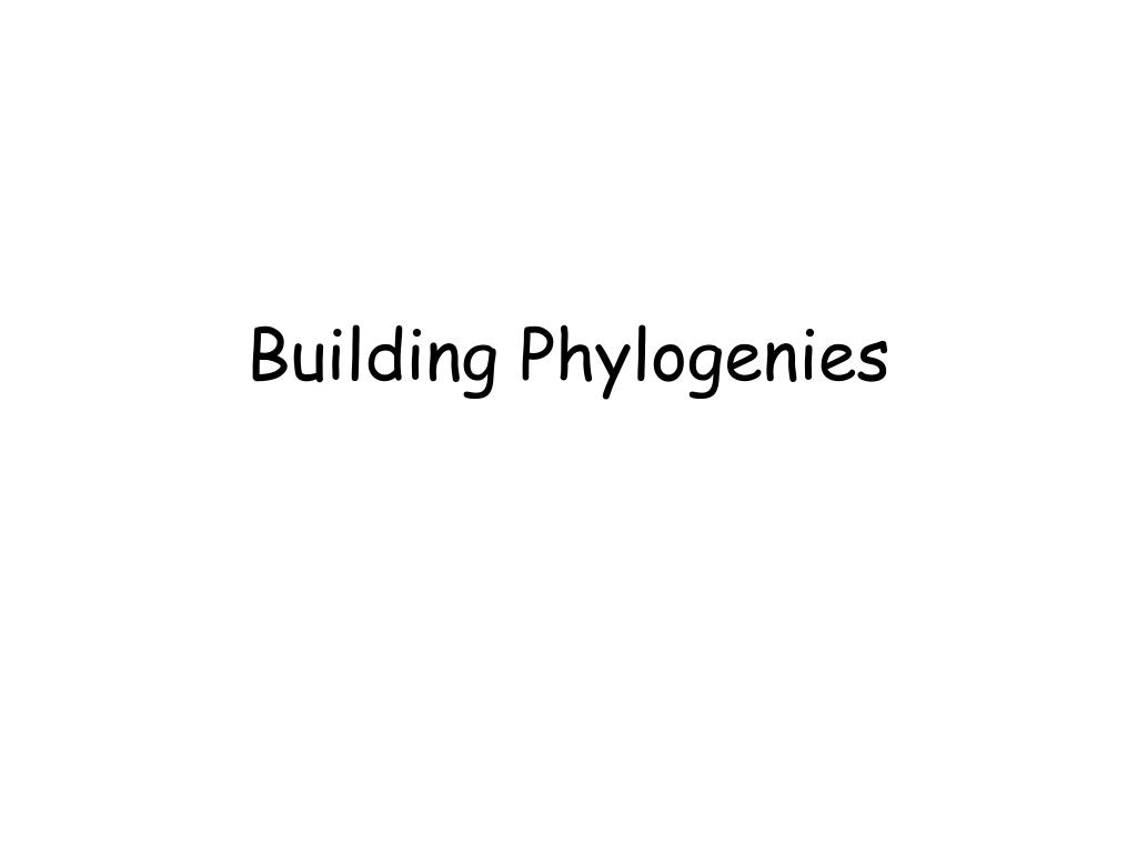 building phylogenies l.