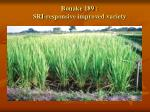 bouake 189 sri responsive improved variety