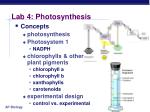 lab 4 photosynthesis5