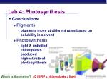 lab 4 photosynthesis7