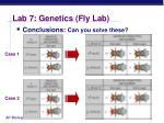 lab 7 genetics fly lab25