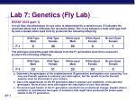 lab 7 genetics fly lab26