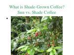 what is shade grown coffee sun vs shade coffee