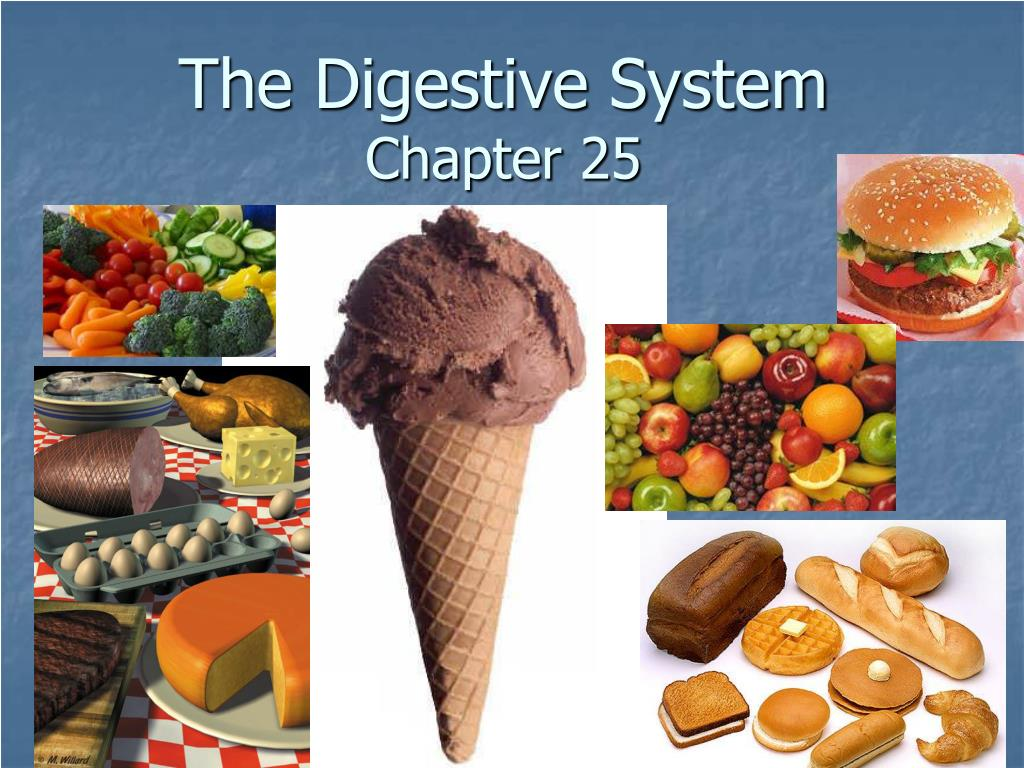 the digestive system chapter 25 l.