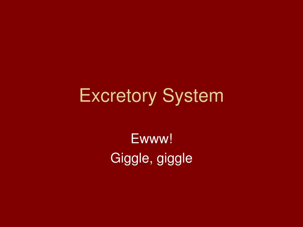 excretory system l.