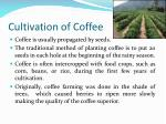 cultivation of coffee
