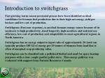 introduction to switchgrass