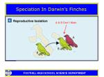 speciation in darwin s finches22