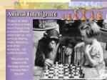 animal intelligence1