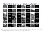 contextual control of focus of attention41