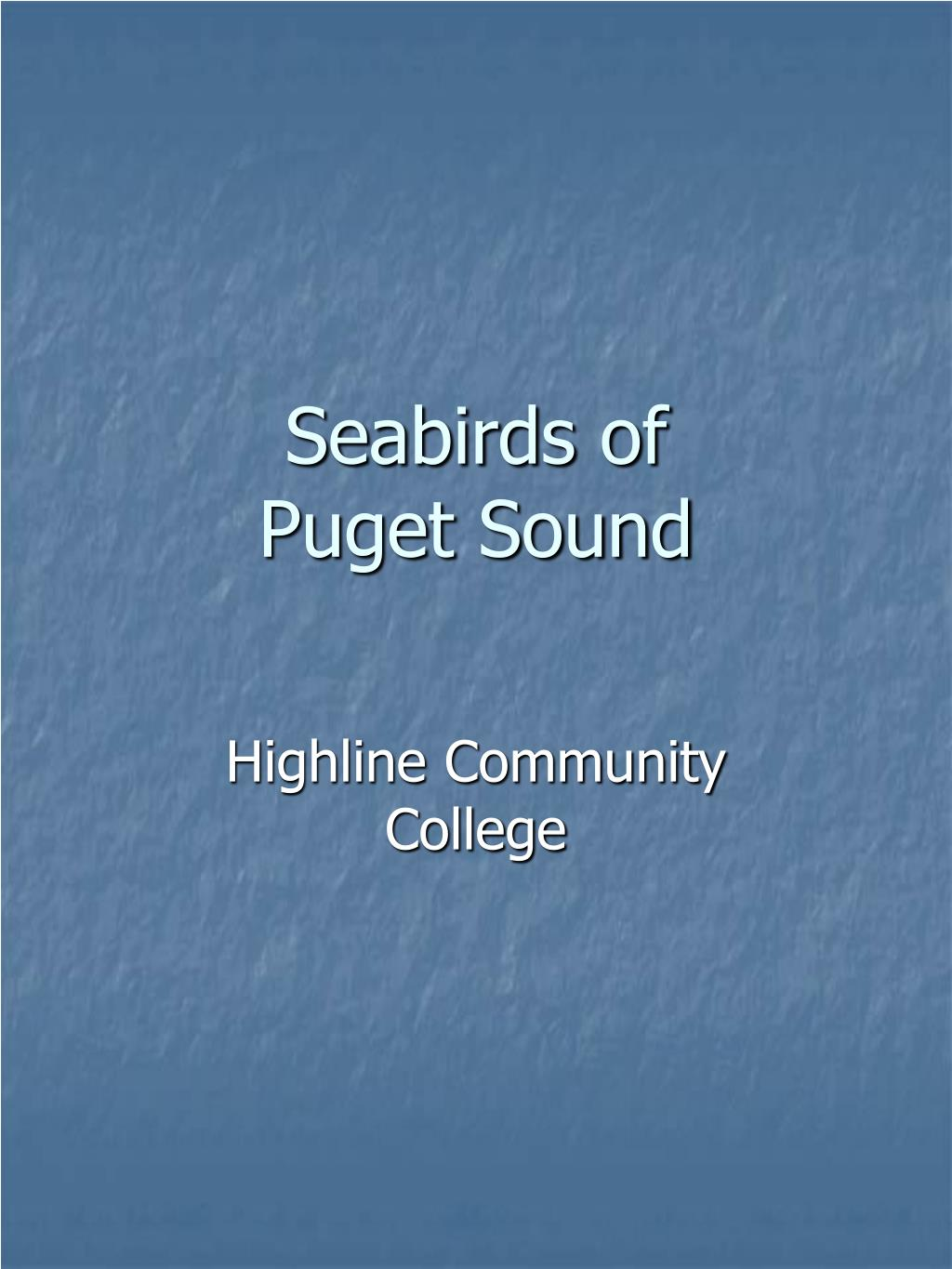 seabirds of puget sound l.