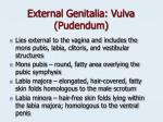external genitalia vulva pudendum