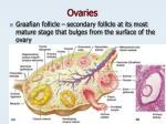 ovaries5