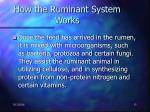 how the ruminant system works