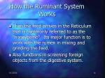 how the ruminant system works14