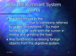 how the ruminant system works32