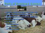 parts of ruminant system