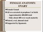 female anatomy ovary