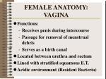 female anatomy vagina