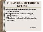 formation of corpus luteum