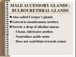 male accessory glands bulbourethral glands