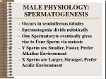 male physiology spermatogenesis