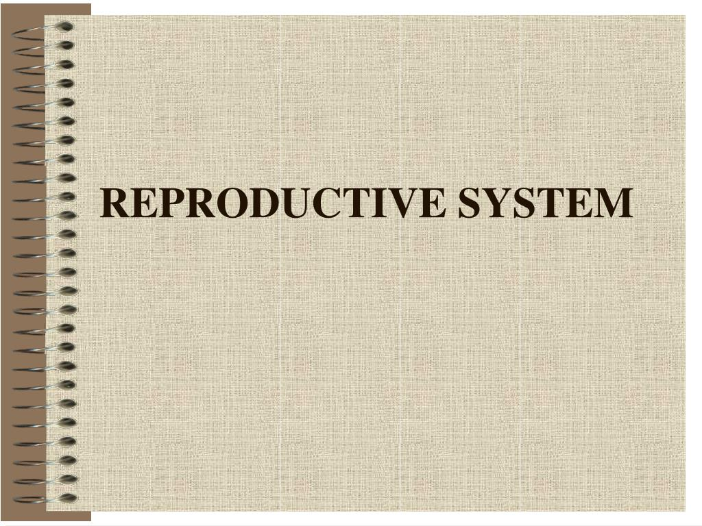 reproductive system l.