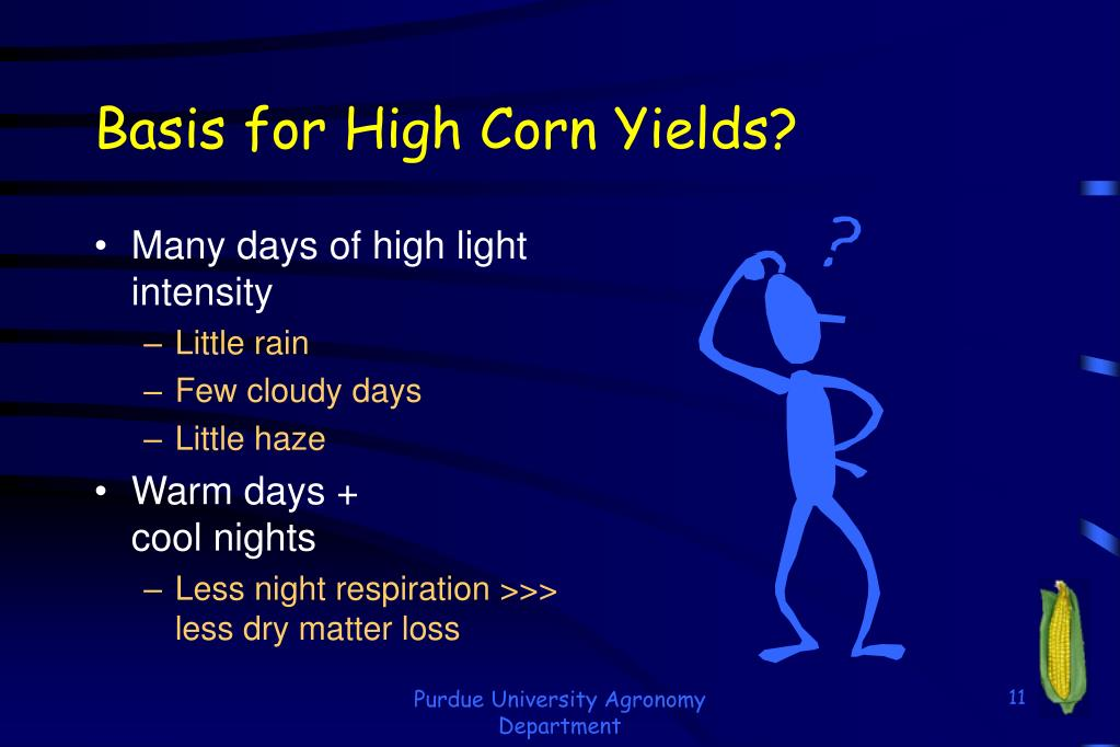 Basis for High Corn Yields?