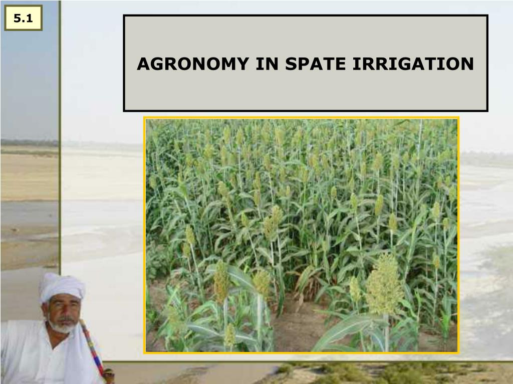 agronomy in spate irrigation l.