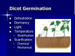 dicot germination