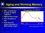 aging and working memory